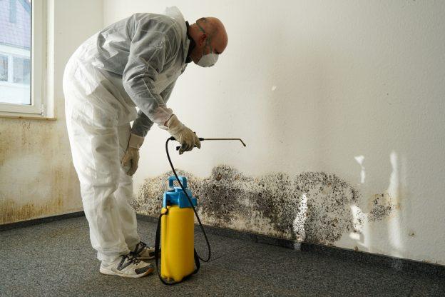 Mögelsanering får bort skadligt mögel